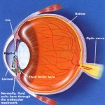 Glaucoma and the Risk of Stroke